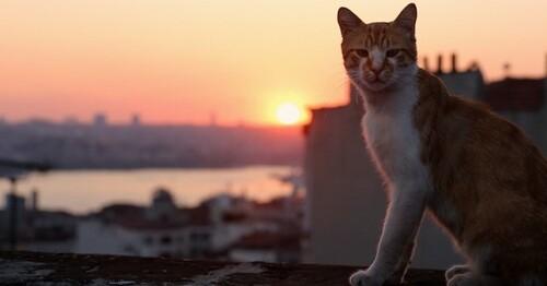 Interview de Ceyda Torun réalisatrice de Kedi Les chats d'Istanbul