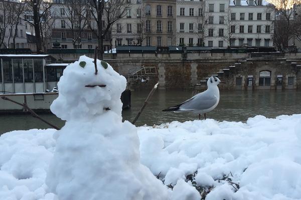 Bonhomme de neige et mouette rieuse