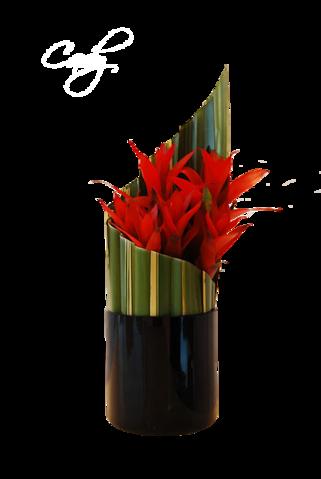 Exclusíve virágok