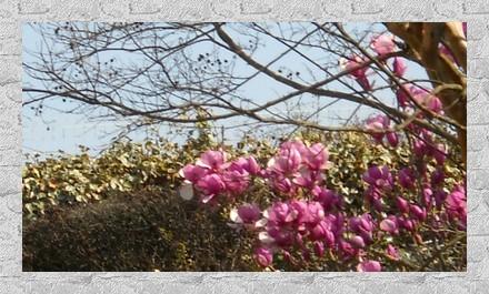2012-03-28-001.jpg