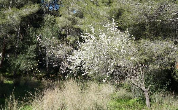 Fleurs de la Costa Blanca
