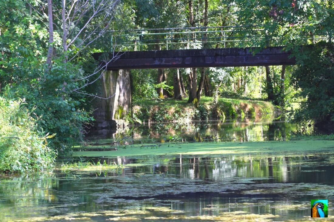 SAINT  SIMON  : Balade en gabarre sur la Charente