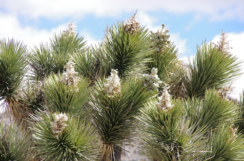 Joshua Tree National Park #12