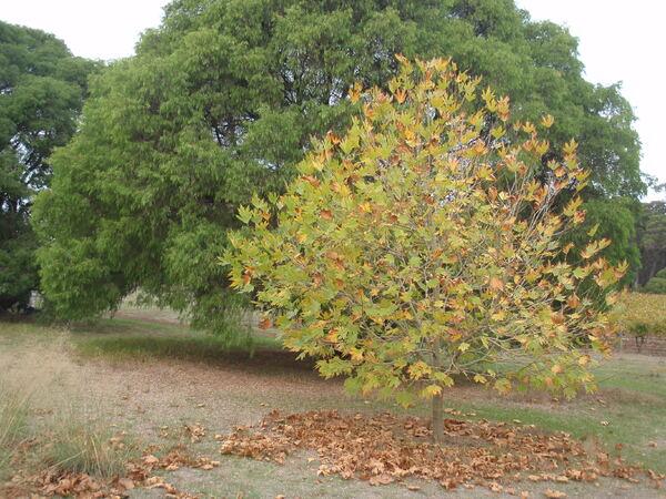 L'automne en Australie
