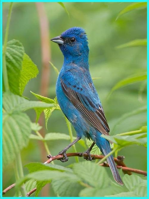 L'Oiseau merveilleux