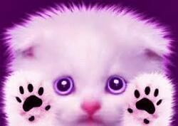 Cat-My.