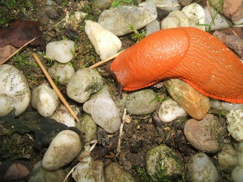 petite limace allant chercher sa nourriture
