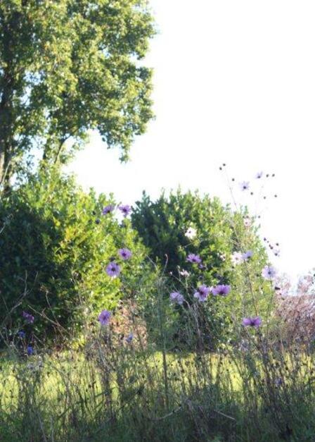 jardin à St Urbain 042