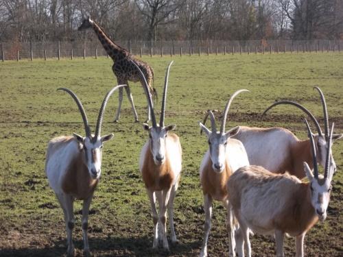 Ballade au zoo