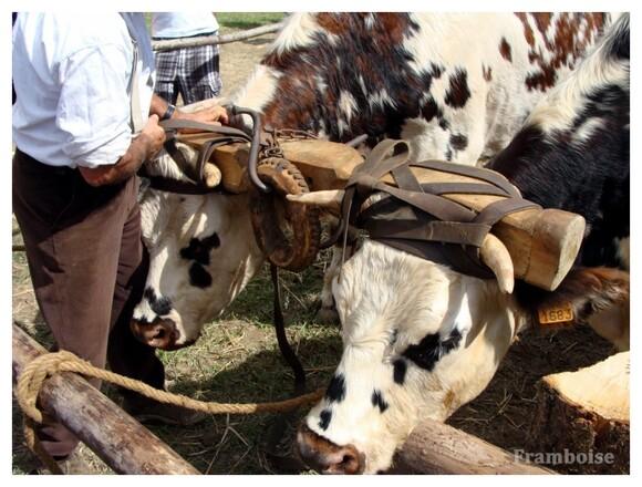 Fête de l'Agriculture à Rouans  2011