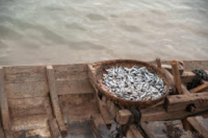 Kampong Cham : Marché aux poisson
