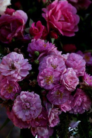 Overdose de roses (suite)