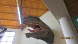 Un musée paléontologique