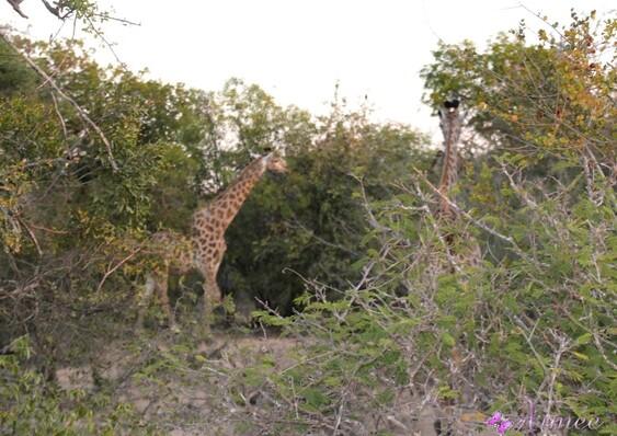 Afrique du Sud : juin 2018: suite 3/4