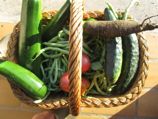Culture conventionnelle, bio, naturelle, permaculture, comment s'y retrouver ?