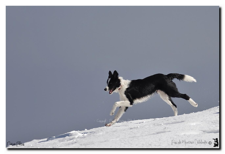 Gampo fait découvrir la neige à Loo sur le Mont-Aigoual