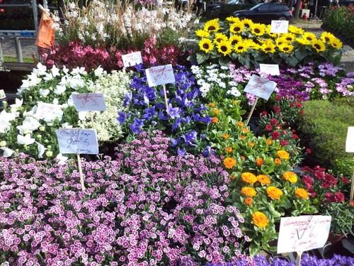 Quelques fleurs du marché