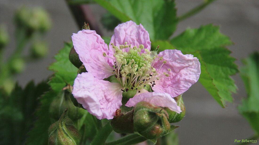 Nos fleurs du jardin