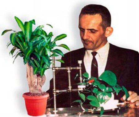Les plantes ont-elles des émotions ?