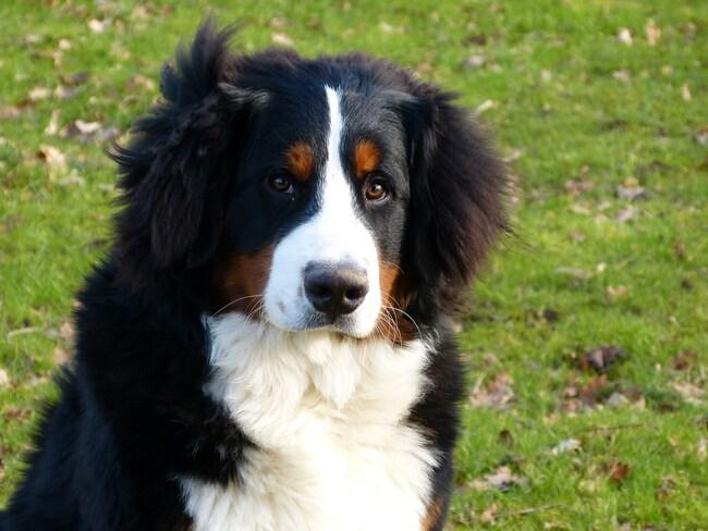 Jasper, 7 mois