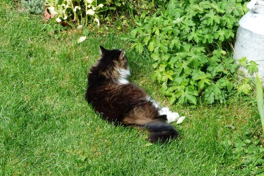En balade et au jardin