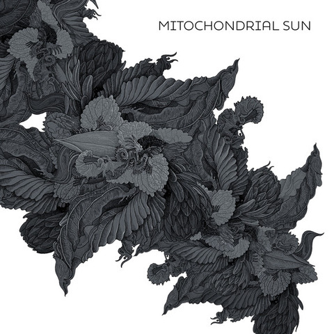 "MITOCHONDRIAL SUN - ""The Great Filter"" Clip"