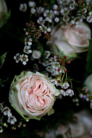 A Romantic Christmas (8)