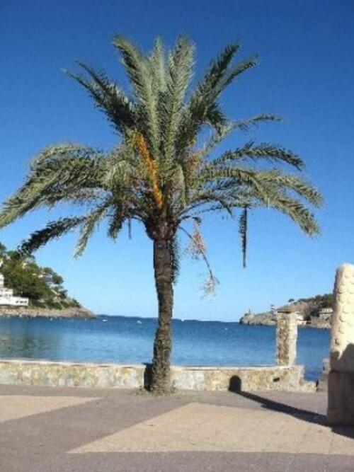 un petit tour à Puerto Soller, sa baie , son port