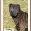 Fang 2