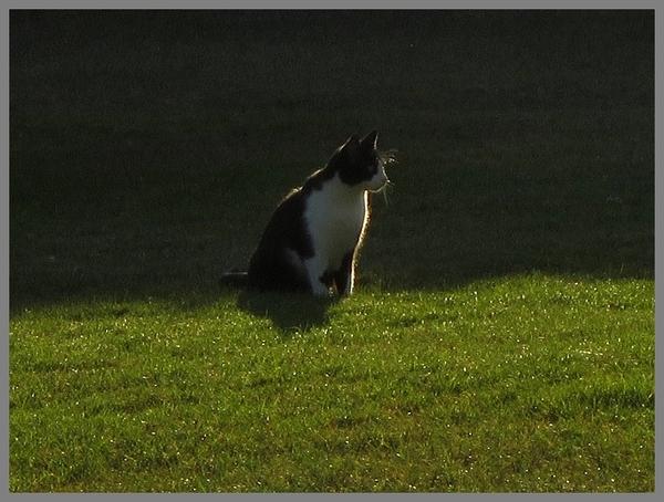 n complément indispensable à la santé de votre petit félin : l'herbe à chat