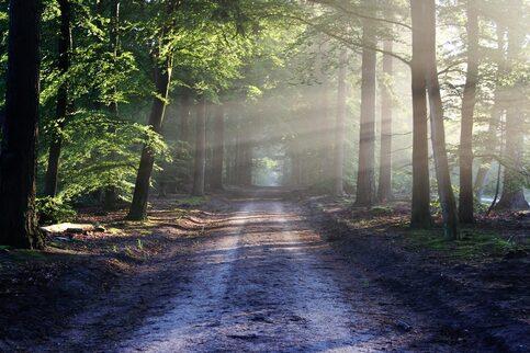 L'image contient peut-être: arbre, plante, plein air et nature