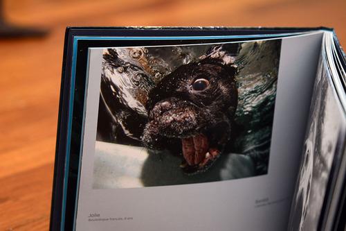 Chiens sous l'eau - Seth Casteel