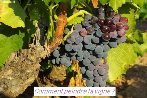 Dessin et peinture - vidéo 2912 : Comment peindre vignes ou vignoble ? - pastel sec.
