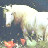 Licornes #01