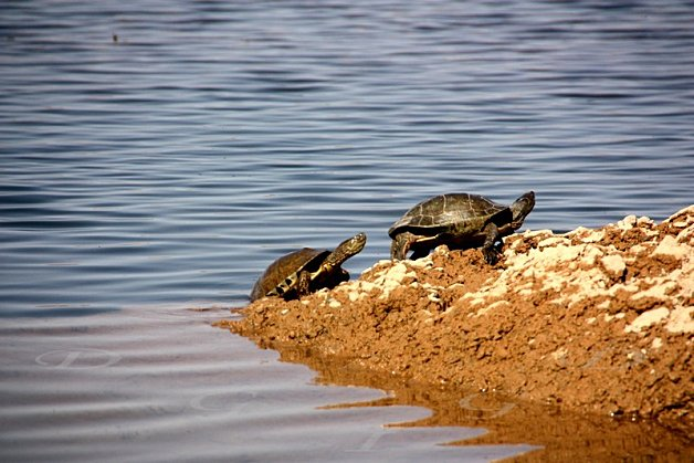 tortues-Bivouac-vers-Ouarzazate-049.jpg