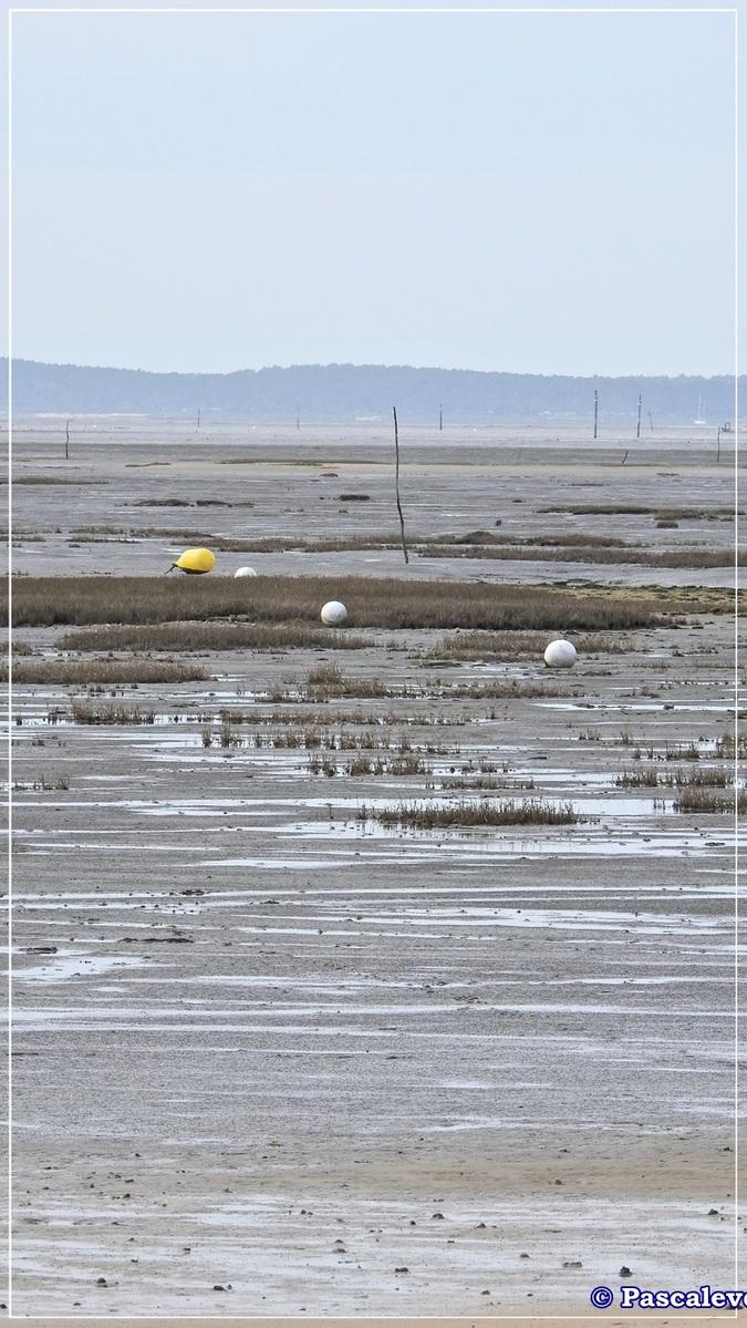 En longeant la plage entre Lanton et Cassy - fin Mars 2016 - 2/8