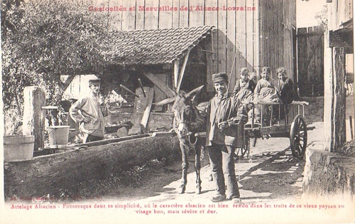 Attelage Alsacien - Curiosité et Merveilles d'Alsace-Lorraine