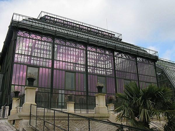 Jardin-des-plantes--grande-serre-tropicale-IMG_1294.JPG