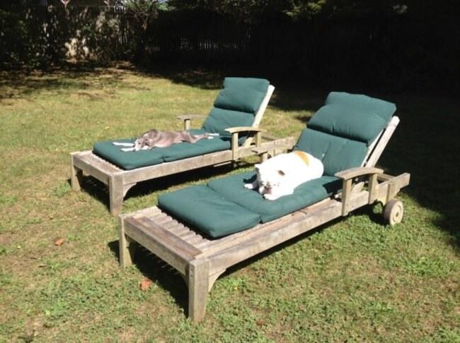"""""""Lou""""  sur une chaise longue"""
