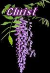 Détourage Orchidée.