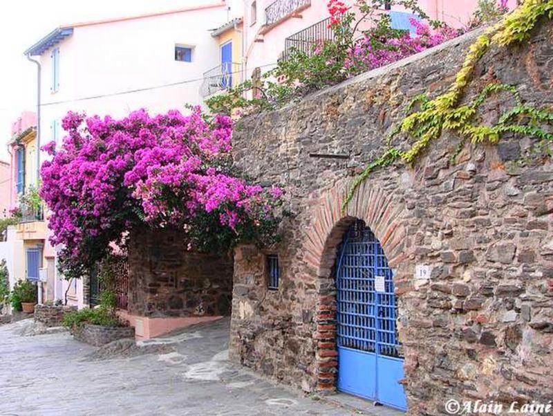Collioure_2008_61
