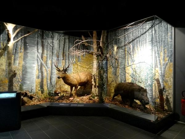 Le Museum d'Histoire Naturelle de Dijon