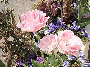 jardin 016