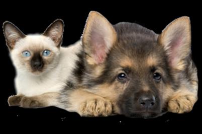 Tubes chien et chat