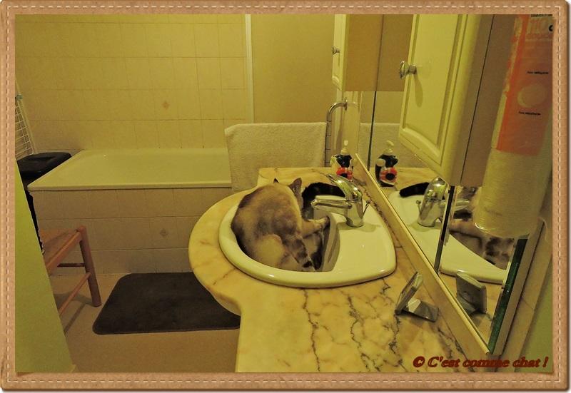 ... en lavabo !