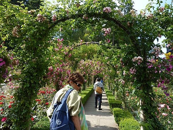 Jour 24 Butchart Gardens arceaux roses
