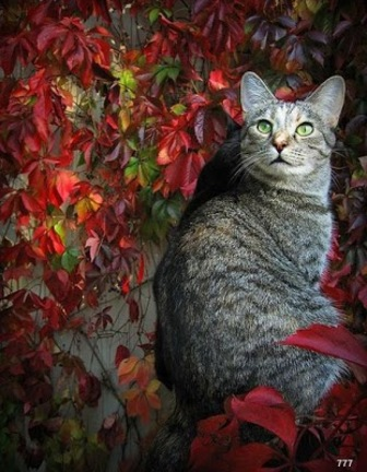 le chat....