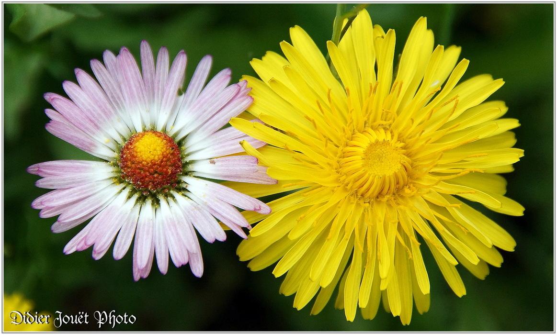 Z'autres... Fleurs Diverses