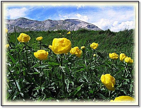 fleur-des-alpes-5.jpg