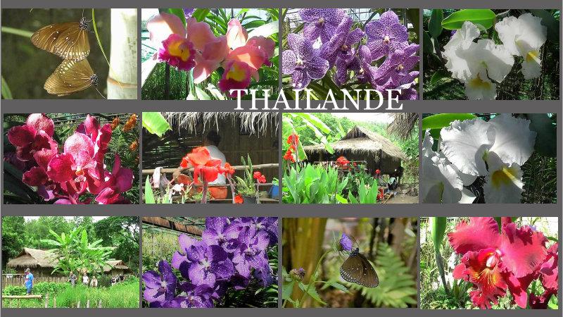 25/4/19 - Thaïlande (9/10)...